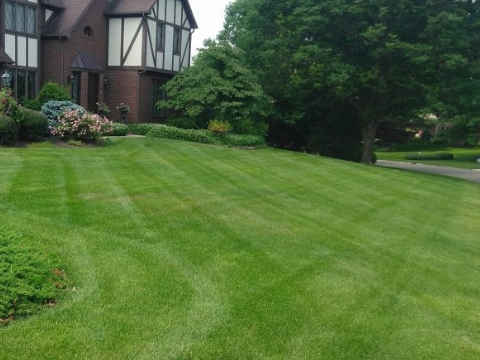 Lawn Fertilization Massillon OH